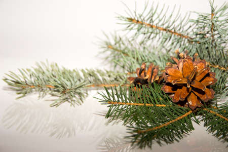 fir cones: Fir cones on a Christmas tree. Stock Photo