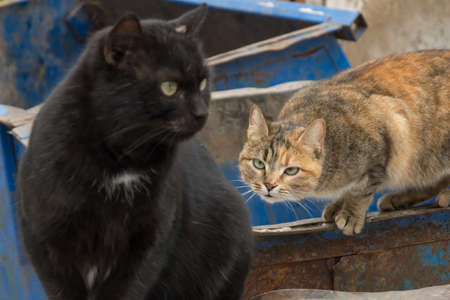 cesspool: the lives of two street cats