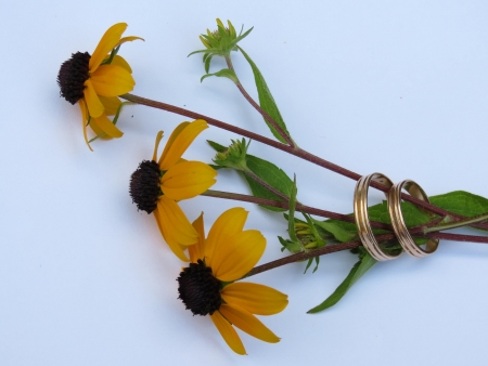 Two wedding rings are inserted in a bouquet of three yellow flowers                          photo