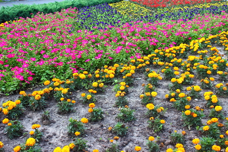 red pink: flowerbed seated multicolored flowers: yellow, red, pink, blue, orange