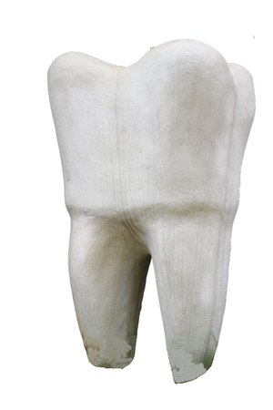 depicts: on a white background depicts the layout of the tooth Stock Photo