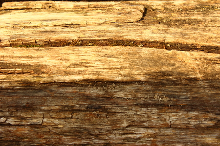 wood texture close up photo