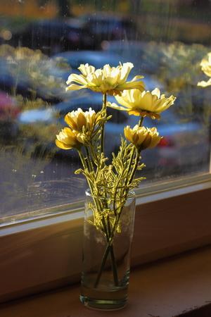 delicate: white delicate flowers