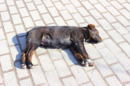 cansancio: sobre la losa de pavimento perro del d�a de dormir