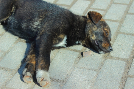 cansancio: duerme en un perro negro losa de pavimento