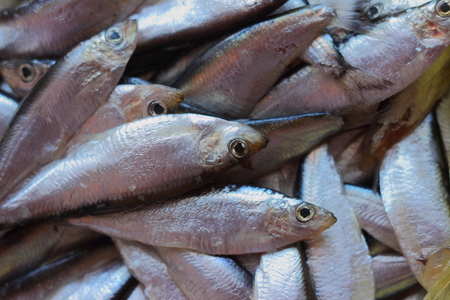 sprat: is a large number of large sprat Stock Photo