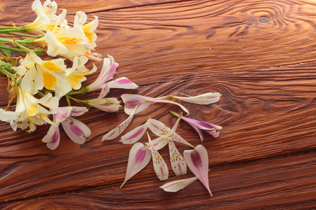 alstromeria: on a wooden board leaves and branches alsromerii white