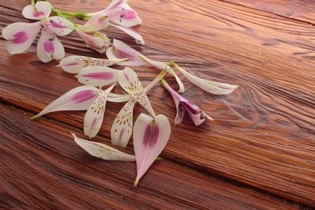 alstroemeria: on a wooden board pieces of fallen branches and alstroemeria Stock Photo