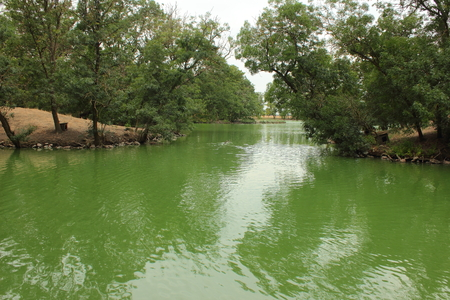 placid water: green lake with trees around Stock Photo