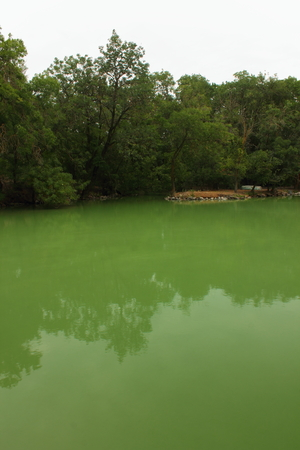 placid water: view of the lake with green trees on the shore