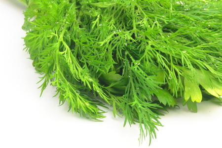 freshly: lie on white background freshly picked dill and parsley