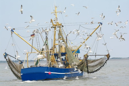 commercial fishing: Fishing Boat with seagulls North Sea