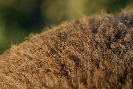 sheepskin: Sheepskin
