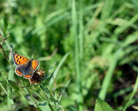 feeler: Butterfly