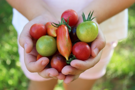 handful of cherry tomatoes Stock Photo