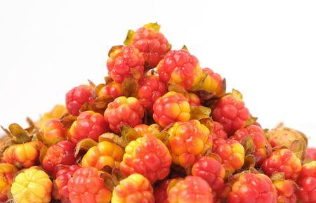 rubus: Rubus chamaemorus on a white background