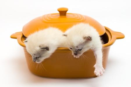 naar beneden kijken: kittens zitten in een pan en kijk naar beneden