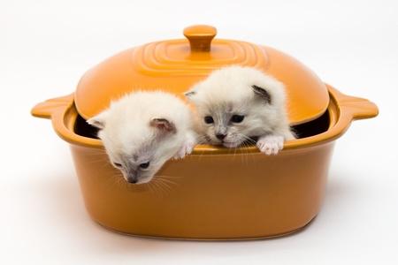 naar beneden kijken: kittens in een pan op een witte achtergrond naar beneden kijken