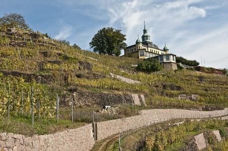 vineyards near dresden in dresden, germany Editorial