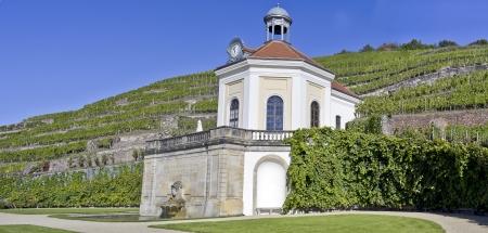 Vine in Dresden, Germany Editorial