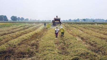 rice field in Thailande