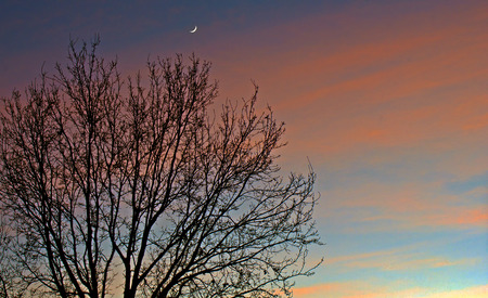 tree branch: Sunset and Moon Stock Photo