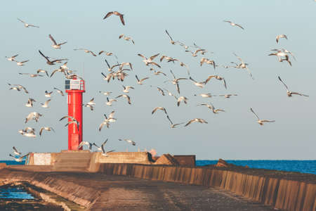 White seagulls flying against the red lighthouse Stock Photo