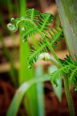 verduras verdes: Los vegetales verdes