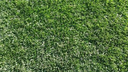 緑の草 写真素材 - 46397047