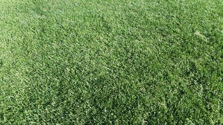 緑の草 写真素材 - 46397051