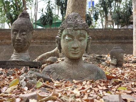 cabeza de buda: Cabeza de Buda en la Planta