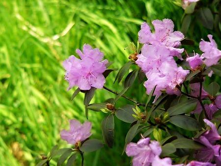 stamin: Pink Flowers