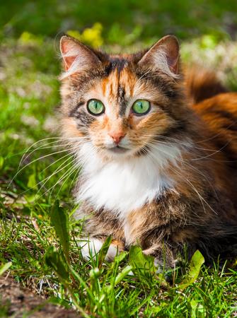 beautiful cat on a green field in spring dandelions