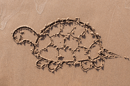 turtle. Hand drawn with stick on sand on beach. Beach background. Top view