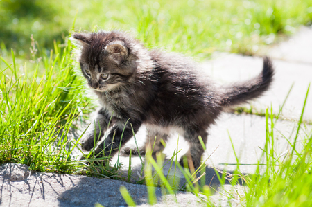 small funny kitten is walking on the road