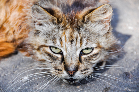 A sick cat lies on the road near the wall of the house and asks for help