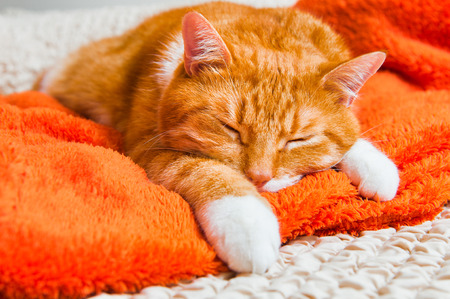 bright red cat sweetly sleeping on the couch