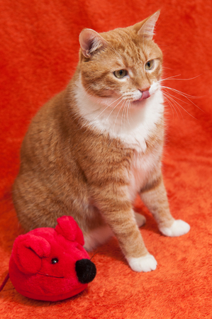 funny red cat is playing with plush toy mouse