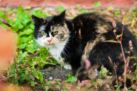 cowardly unusual spotted multicolor cat with interestinr color coat outside in spring time