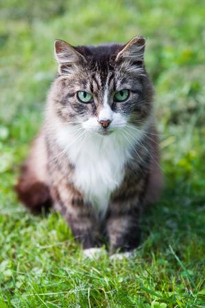 tabby cat is walking in green field Stock Photo