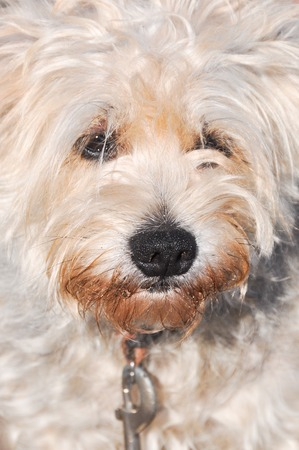 funny fluffy cross breed dog close up portrait