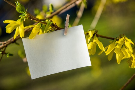 White card on yellow flowers bush background blank card hanging stock photo white card on yellow flowers bush background blank card hanging on tree outdoors mightylinksfo