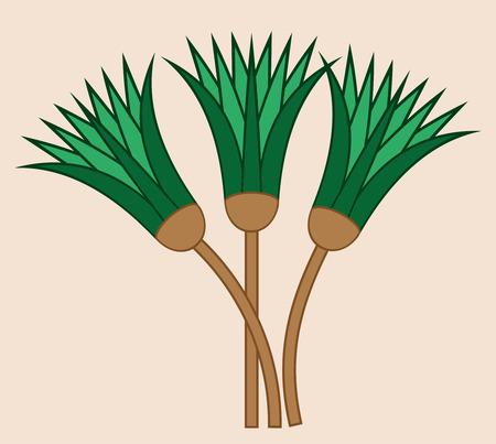 Papyrus plant shaft. Ornamental cane stems element of Ancient Egypt.