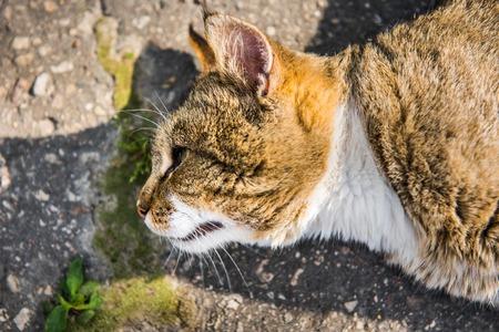 Cat got sunstroke. Cat is lying on the road on asphalt. Strange facial expression. Reklamní fotografie - 123827156