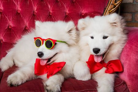 Funny dogs on the red luxury couch at the party