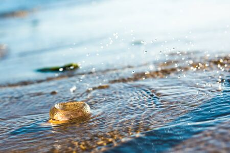 Single Moon Jellyfish lying on the Baltic Sea beach during the sunset Banque d'images