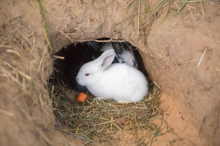Little rabbits are sitting in a hole