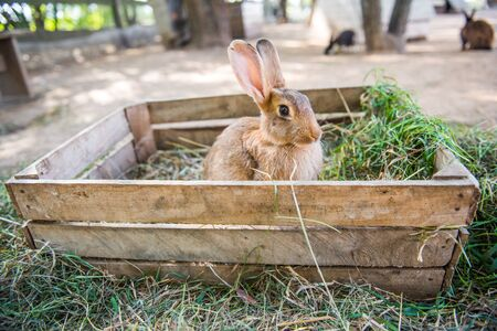 Big rabbit is standing in the wooden box with hay.
