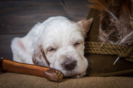 english setter puppy hunting dog next to a hunting knife and a hat with duck feathers
