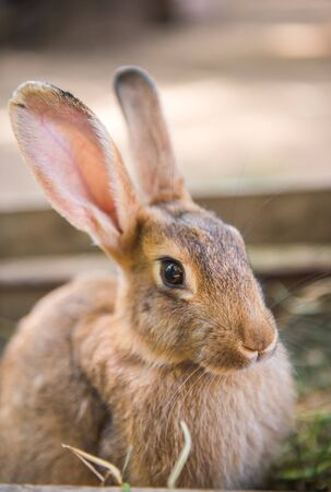 Großes Kaninchen steht mit Heu in der Holzkiste.